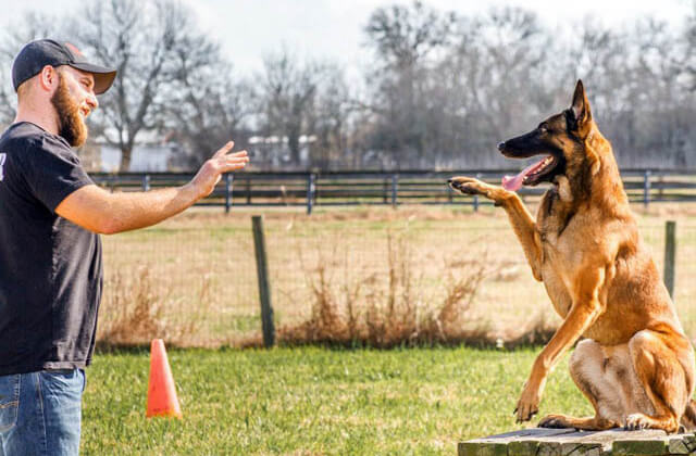 Animal Training and Behavior Modification (Non-canine)